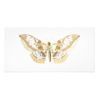 Mariposa de GlassWing Plantilla Para Tarjeta De Foto