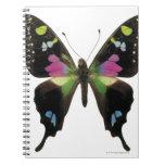 Mariposa de Graphium Spiral Notebooks