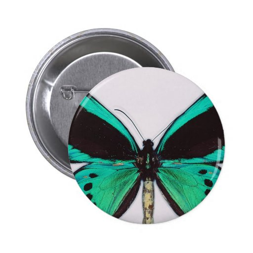 Mariposa de la aguamarina pin redondo 5 cm