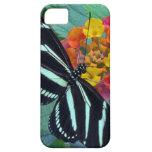 Mariposa de la cebra iPhone 5 cárcasa