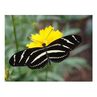 Mariposa de la cebra tarjeta postal