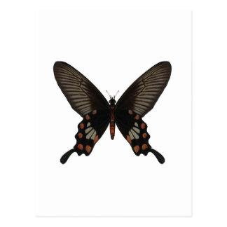 Mariposa de la cola del trago del rosa tarjeta postal