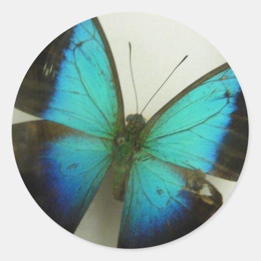 Mariposa de la Florida Pegatina Redonda