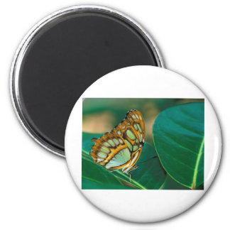 mariposa de la malaquita de las mariposas imán redondo 5 cm