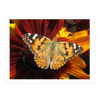 Mariposa de la postal