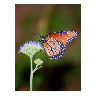 Mariposa de la reina postal