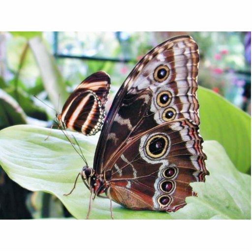 Mariposa de las mariposas escultura fotográfica