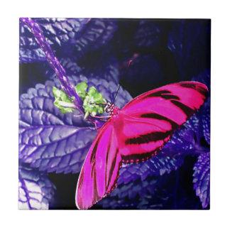 Mariposa de las rosas fuertes en la planta púrpura azulejo cuadrado pequeño