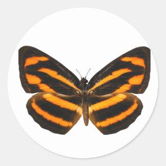 Mariposa de Lascar del birmano Pegatina Redonda