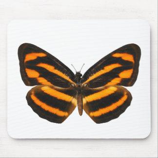 Mariposa de Lascar del birmano Tapete De Ratones