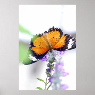 Mariposa de Lavendere Póster