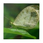 Mariposa de Leptosia Nina de la psique Azulejo Ceramica