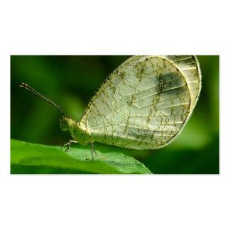 Mariposa de Leptosia Nina de la psique Plantilla De Tarjeta Personal