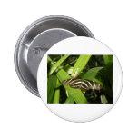 Mariposa de Longwing de la cebra Pin