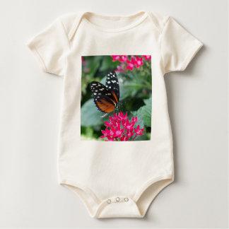 Mariposa de Longwing del tigre Mamelucos