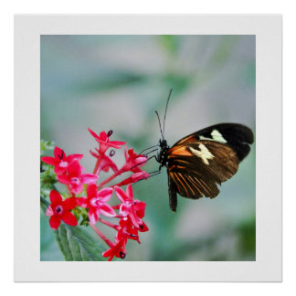 Mariposa de Madeira Posters