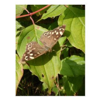 Mariposa de madera manchada tarjeta postal