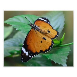 Mariposa de monarca africana tramada fuera de fotografías