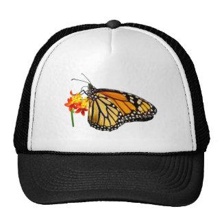Mariposa de monarca aislada gorras de camionero