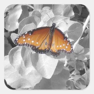 Mariposa de monarca anaranjada contra blanco y pegatina cuadrada