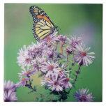 Mariposa de monarca azulejo cuadrado grande