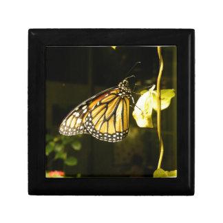 Mariposa de monarca caja de regalo