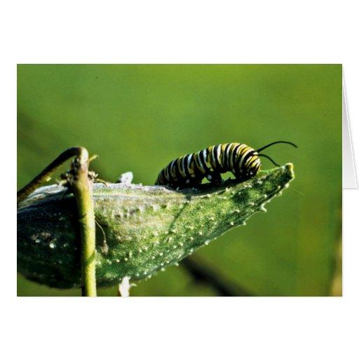 Mariposa de monarca Caterpillar Felicitación