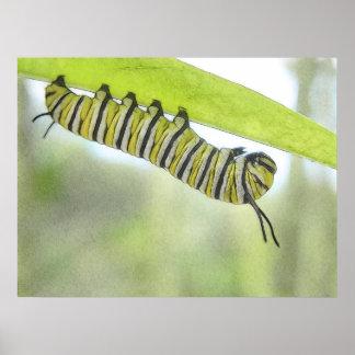 Mariposa de monarca Caterpillar que explora un Mil Póster