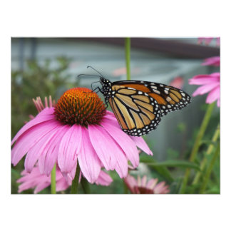 Mariposa de monarca cojinete