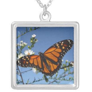 Mariposa de monarca, collar