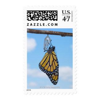Mariposa de monarca, con la crisálida sellos postales
