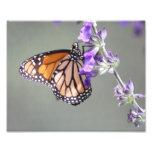 Mariposa de monarca con las flores impresiones fotograficas