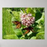 Mariposa de monarca de acoplamiento en la foto del impresiones