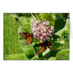 Mariposa de monarca de acoplamiento en la foto del tarjetas