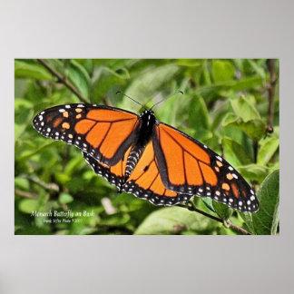 Mariposa de monarca de Cape Cod Posters
