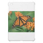 mariposa de monarca de las mariposas