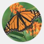 mariposa de monarca de las mariposas etiquetas redondas