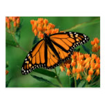 mariposa de monarca de las mariposas postal