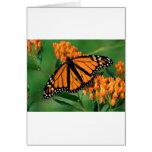 mariposa de monarca de las mariposas felicitaciones