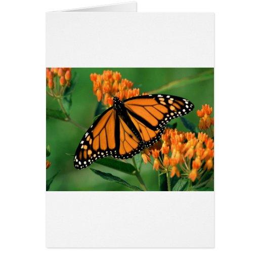 mariposa de monarca de las mariposas tarjeta de felicitación