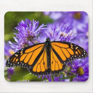 Mariposa de monarca de Mousepad en asteres púrpura