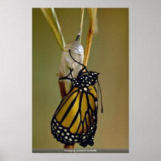 Mariposa de monarca emergente impresiones