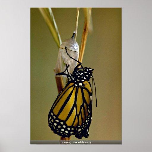 Mariposa de monarca emergente póster