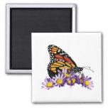 Mariposa de monarca en aster iman de nevera