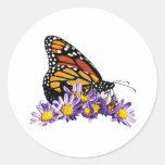 Mariposa de monarca en aster pegatina redonda