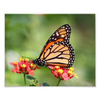 Mariposa de monarca en dos flores del Lantana Fotografía