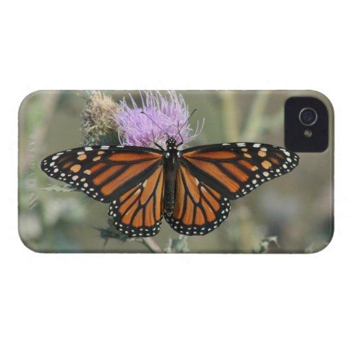 Mariposa de monarca en el caso del iPhone 4 de la iPhone 4 Case-Mate Cárcasas