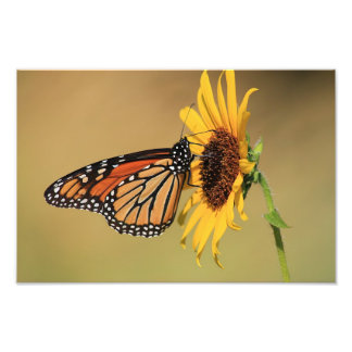 Mariposa de monarca en el girasol fotografía