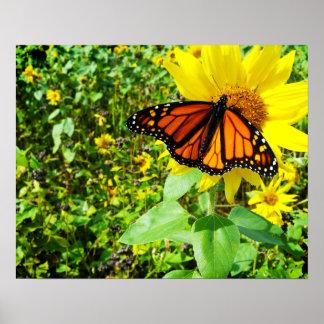 Mariposa de monarca en el girasol impresiones