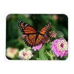 Mariposa de monarca en el Lantana Flowers.Magnet Imanes Rectangulares